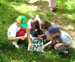 Sorties scolaires, la forêt