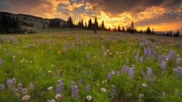 wildflower-meadow-wallpaper-2